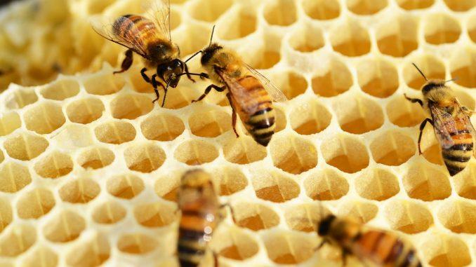 Amman Mineral Budidayakan Lebah Madu di Areal Reklamasi - AgriFood.id