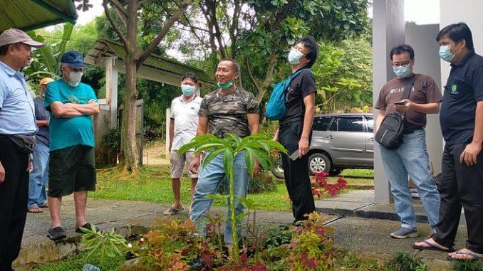 Tanaman porang menghiasi Villa Wi di Hambalang, kawasan Sentul, Kabupaten Bogor, Jawa Barat.